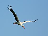 Flotte Sprüche - Fliegender Storch