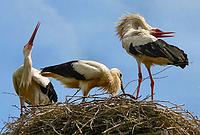 Lustige Geburtstagssprüche vom Glückstier Storch